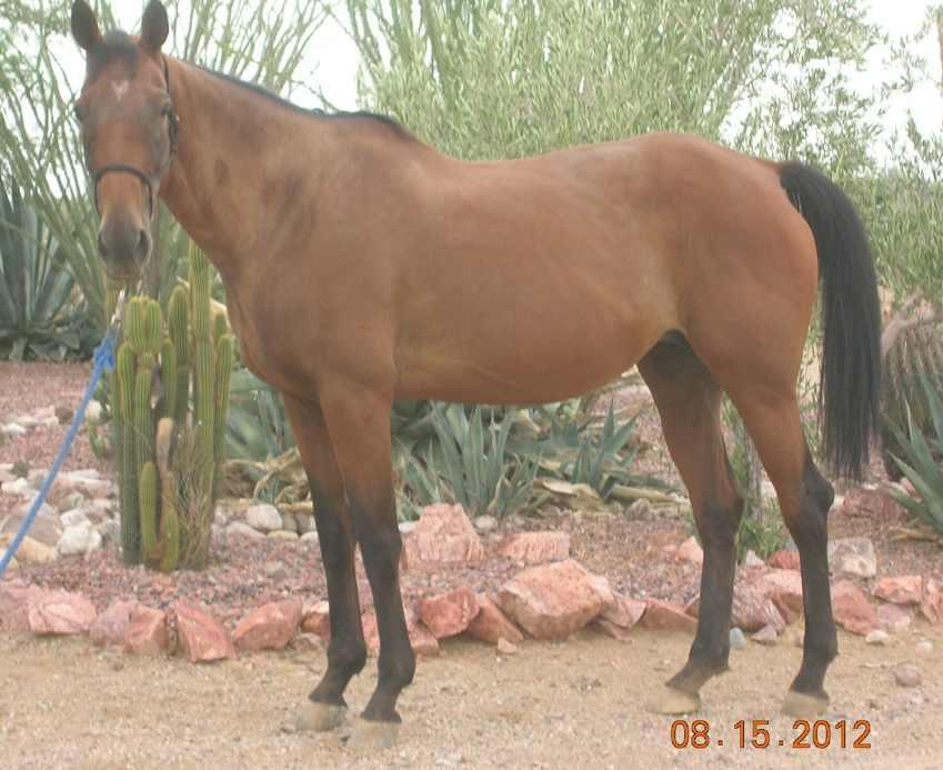 After the Homestretch: Working to Rehab Thoroughbreds in Arizona