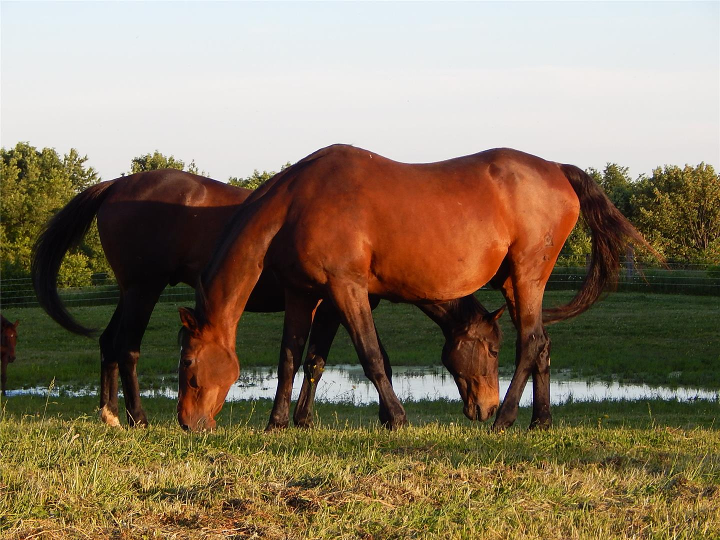 Bright Futures Farm: Thoroughbred Advocacy, Retraining, and Placement