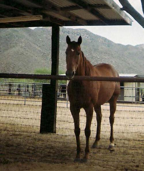 Equine Encore Provides Permanent Retirement Under the Tucson Sun